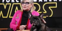 Cachorro de Carrie Fisher assistiu a Os Últimos Jedi e reagiu a todas as cenas com Leia